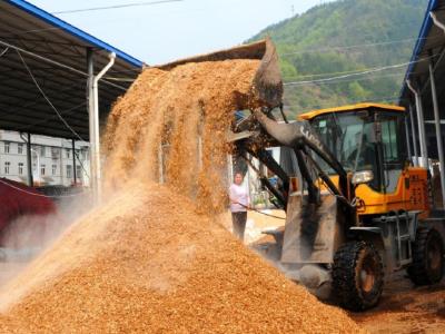 潘口鄉:12個食用菌基地有序復工復產