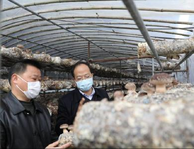 縣領導督導疫情防控和春菇生產工作