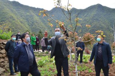 雙臺鄉:舉行春季核桃產業管護培訓會