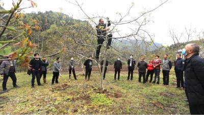 县林业局:开展林果技术培训 助力核桃产业发展