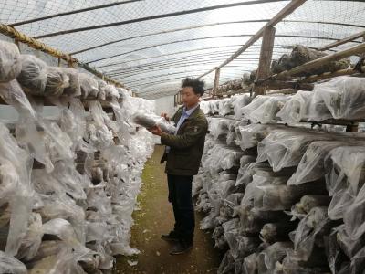 贫困户徐伟发展香菇脱贫致富