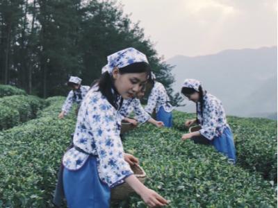 精彩视频|绿满竹山茶香天下