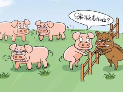 """""""预防猪瘟""""种罂粟 糊涂老汉受处罚"""