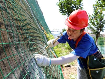 竹山實施立體綠化助力國家園林縣城創建