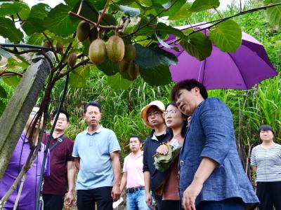 中科院專家來我縣調研獼猴桃產業發展情況