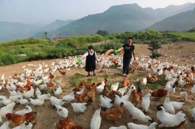 脫貧故事|湖北竹山:楊銳夫婦三算賬
