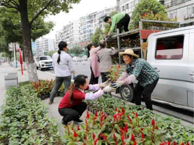 喜迎国庆中秋 8万盆花卉扮靓竹山街头