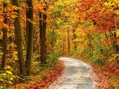 对秋的思念