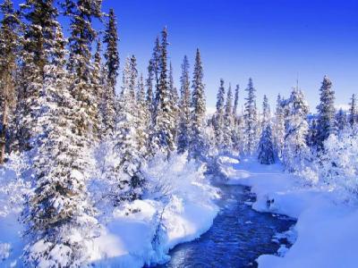 冬      雪