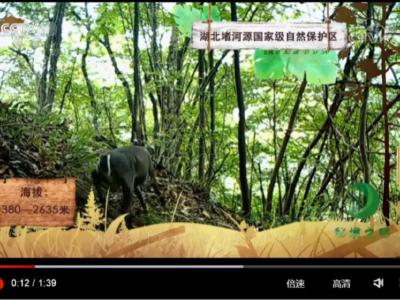 堵河源管理局红外相机监测影像再次登录央视