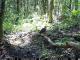 竹山堵河源首次发现国家二级保护动物凤头鹰