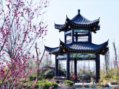 【春节随拍】南山红梅开