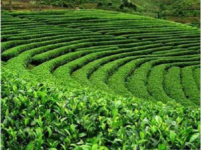 深河乡产业发展使脱贫攻坚与乡村振兴有效衔接