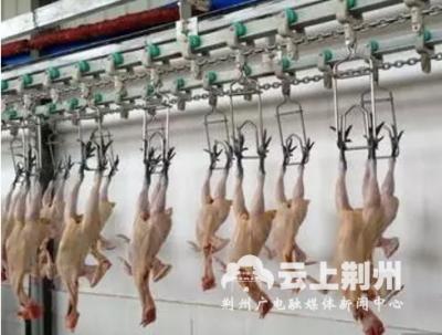 荆州 | 昨起,江陵关闭城区活禽市场,改售白条禽