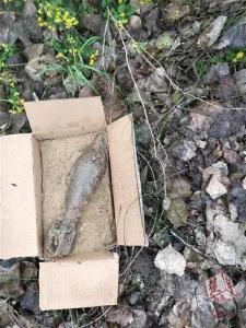 监利一农民挖虾池竟然挖到一枚炸弹 重量达30多斤