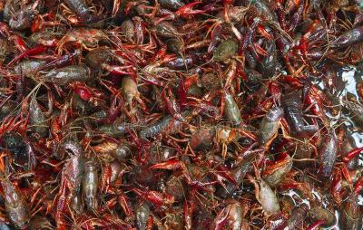 欢迎小龙虾回来!四大水产市场恢复湖北水产销售