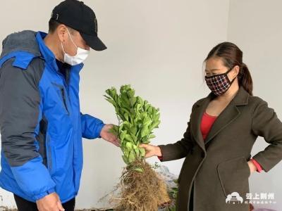 荆州区马山镇安碑村:打造特色产业 助推乡村振兴