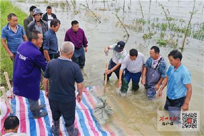 长湖部分生态护坡砖遭冲失,30多名防汛人员紧急护坡