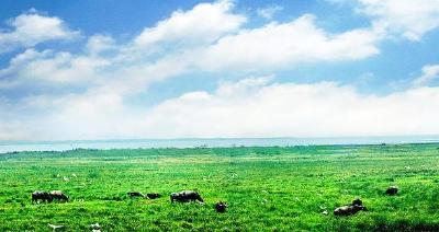 恢复面积1400公顷 武汉一重要湿地保护与恢复项目获批