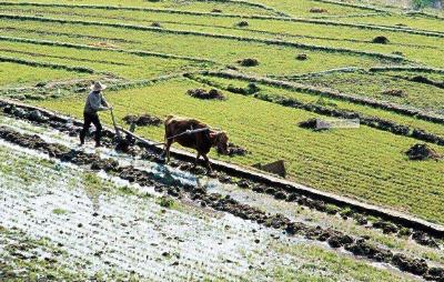 湖北重大项目耕地占补平衡实行省级统筹