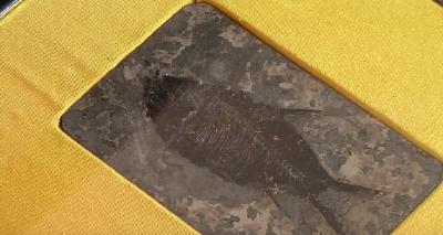 """湖北松滋:""""阿喀琉斯基猴""""发现地将建古化石博物馆"""