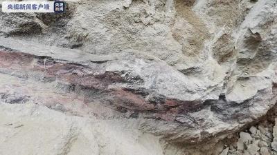 男子外出散步,走着走着就发现了距今1.6亿年恐龙化石