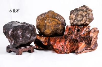 黑龙江发现罕见化石!