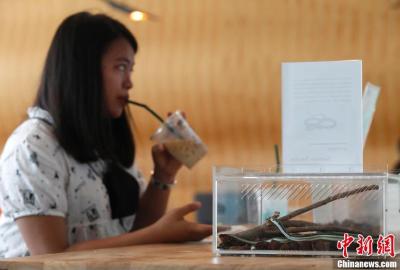 """泰国曼谷现重口味""""蛇咖啡馆"""" 你敢去触摸真蛇吗?"""