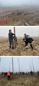 荆州高新区:义务植树 增绿添彩