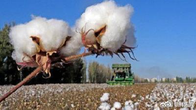 瑞士良好棉花发展协会(BCI)上海代表处:从未在新疆发现一例有关强迫劳动的事件