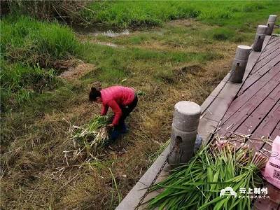 荆州春景正盛,莫让不文明行为伤了美景