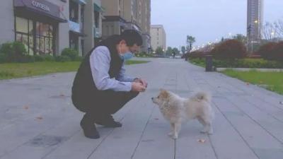 这是一条来自武汉的寻狗启事