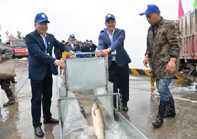 石首向长江增殖放流 四大家鱼亲本507组10516公斤