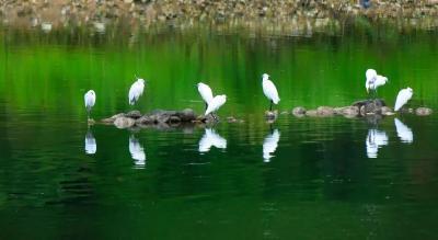 新晋省级重要湿地名单发布,荆州一地上榜!