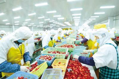 产量连续九年全国第一后谋求转型——监利倾力打造小龙虾餐饮品牌