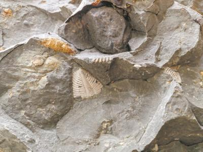 两位奇石爱好者在群山中偶遇地质奇观 宣恩发现5.6亿年前三叶虫化石