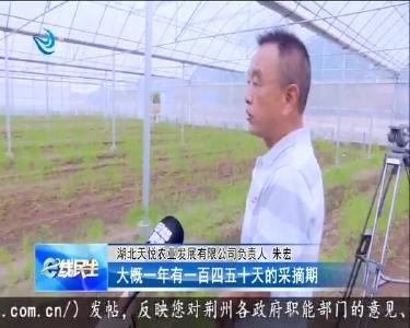 熊河镇:发展芦笋特色产业 助力乡村振兴