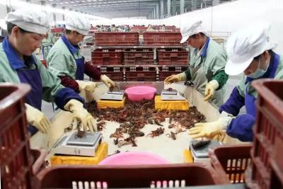 厉害了!监利小龙虾产量连续九年蝉联全国第一