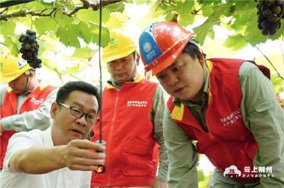 国网公安县供电公司:保障企业生产用电 推进农业提质增效