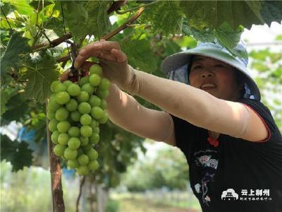 我的小康生活丨荆州开发区滩桥镇武当园村:绘就移民幸福生活新画卷