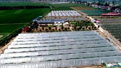 公安县:特色生态农庄助力乡村振兴