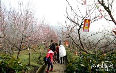 桃之夭夭,灼灼其华——记枝城桃花节
