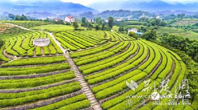 【湖北日报网】宜都弭水桥村:紫薇花枝上重生的村庄