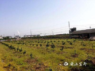 市自然资源和规划局:踏勘陈皮功能产品产业园项目