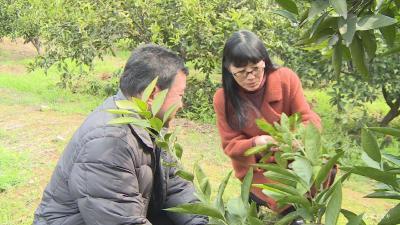 【巾帼风采】湖北最美农技员张卜芬