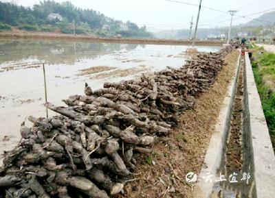 彭家桥村:五大产业助推精准脱贫、乡村振兴