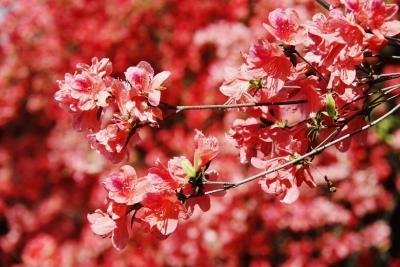 春风十里宜都城