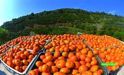 国家发改委新闻发言人向中外媒体记者推介宜都红花柑橘产业园