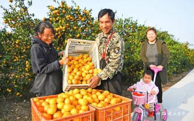 首批国家农村产业融合发展示范园,宜都入选!