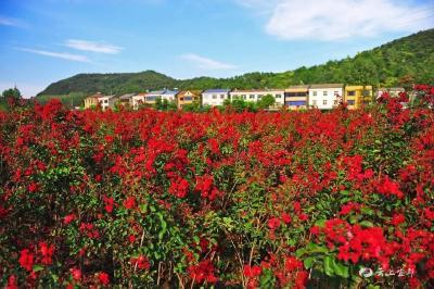 我市这5个地方被评为湖北省休闲农业示范点